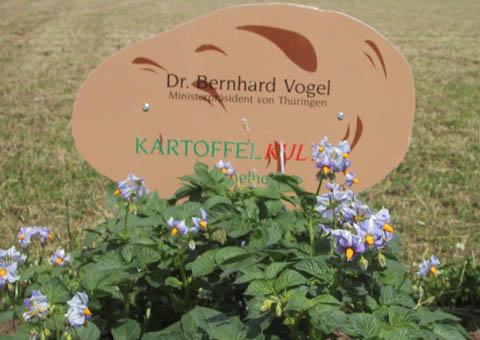 kartoffelbluete kartoffelkultur prominente legen und ernten kartoffeln in heichelheim. Black Bedroom Furniture Sets. Home Design Ideas